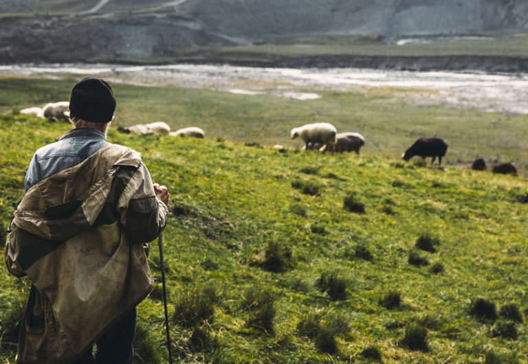 Learning the Voice of the Shepherd